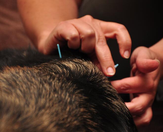 Pet Acupuncture Louisville Colorado