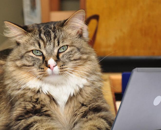 Cat Veterinarian Louisville Colorado
