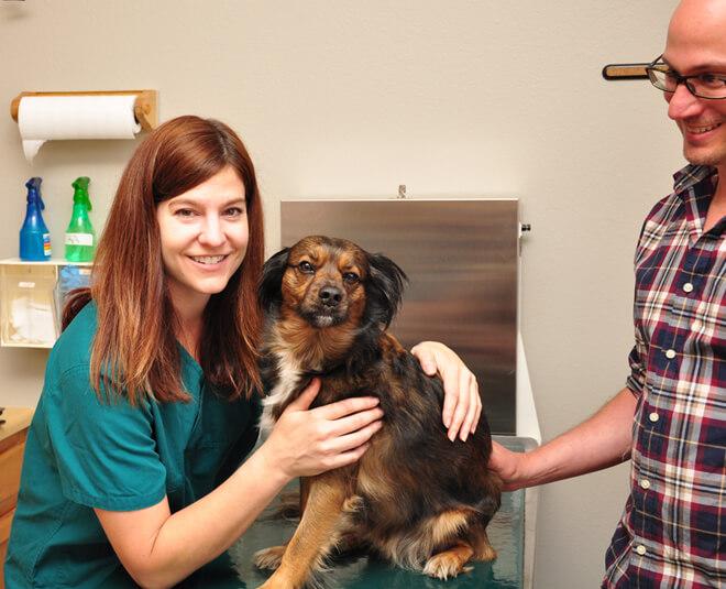 Dog Veterinarian Louisville Colorado