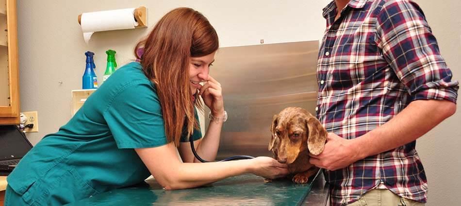 Senior Pet Care at Boulder Natural Animal Hospital